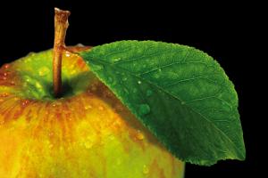 frischer Apfel als Metapher für ein intelligentes Premium-Konzept und gesunde Nahrungsmittel, Premium-Ernährungsplan, Metabolic Balance, individueller Ernährungsplan, individuelles Wohlbefinden, Metabolic Balance Betreuer, Lebensmittel, lokale Produktion, Vielfalt, natürliche Lebensmittel, ökologische-bäuerliche Landwirtschaft