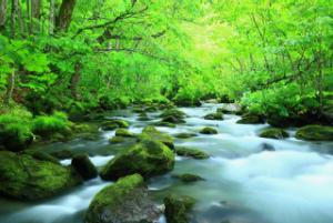 Waldbach als Metapher für Achtsamkeit (engl. Mindfulness), Wertschätzung im beruflichen Alltag und achtsame Führung (engl. mindful leadership)