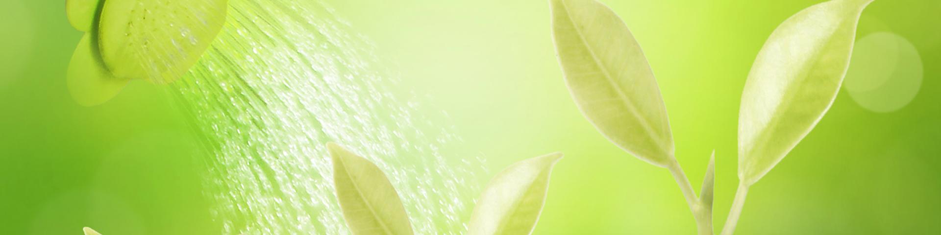 Grüne Pflanzen in fruchtbarem Boden die mit Wasser begossen werden als Metapher für gesundes Personalmanagement, Personalführung, Gärtner, Wissen & Kompetenz, Wissen-Kompetenz, Fürsorge, Entwicklung, Gesundheit durch MINDFUL BWL freie Betriebswirte