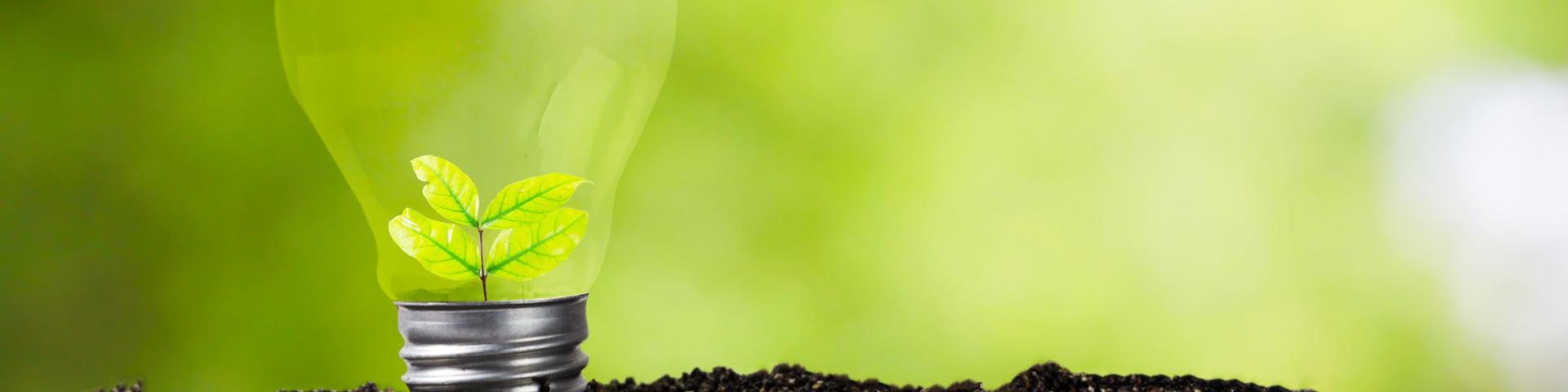 Glühbirne mit heranwachsender Pflanze in fruchtbarem Boden als Metapher für unsere Mission, Über uns Betriebswirte, Energie, Wärme, Kreativität, Ideenreichtum, Mitgefühl, Frank Eckhoff, Karriere