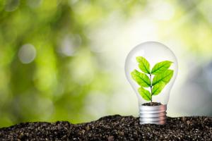 """Fruchtbarer Boden mit Glühbirne in der eine grüne Pflanze wächst als Metapher für Ihr Nutzen, systemische Beratung, Unternehmersprechstunde, Idee, Kreativität, Mitgefühl, Entwicklung und die Frage """"Was sagt der Betriebswirt"""""""