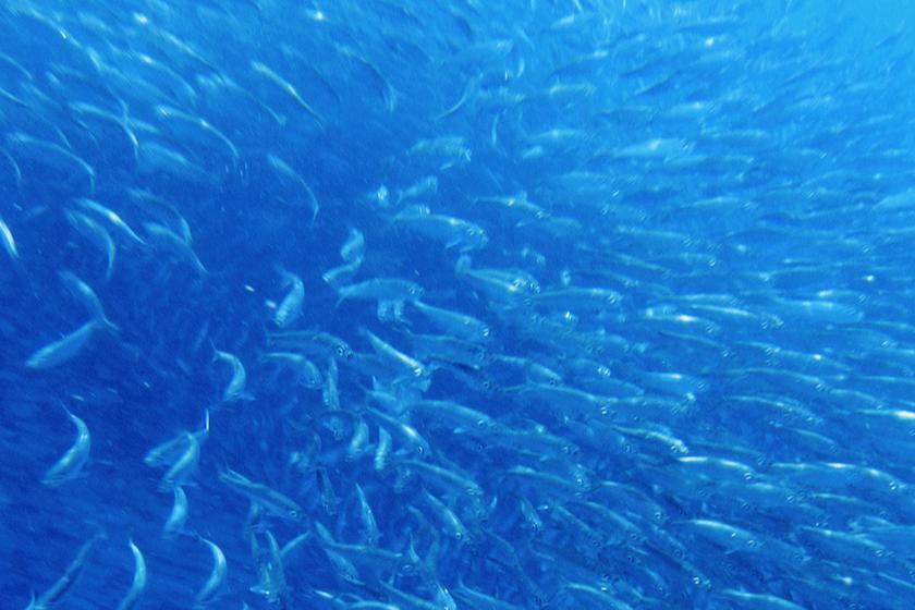 Fischschwarm als Metapher für systemische Selbstorganisation, lebendige und dynamische Kraft von Systemen, lebendigen Systemen, neue Perspektiven, Wahlmöglichkeiten, Mindful-bwl