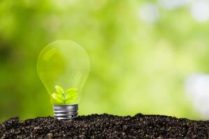 Glühbirne mit heranwachsender Pflanze in fruchtbarem Boden als Metapher für unsere Mission, über uns, Energie, Wärme, Kreativität, Ideenreichtum, Mitgefühl, Frank Eckhoff