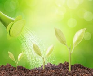 Grüne Pflanzen in fruchtbarem Boden die mit Wasser begossen werden als Metapher für gesundes Personalmanagement, Personalführung, Gärtner, Wissen & Kompetenzen, Fürsorge, Entwicklung, Gesundheit
