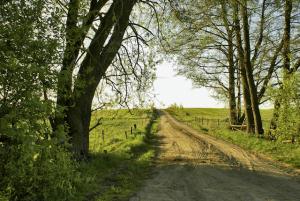 Naturweg mit grünen Bäumen als Metapher für Kontakt, Das 12-Wochen-Programm, Entwicklung, Fortschritt, Bewegung, Natur, Wohlfühlen, Mitgefühl