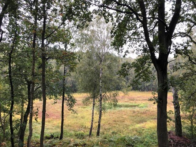 New_Work_Ambidextrie_das-Bild-zeigt-einen-Moor-im-Grundwald-mit-unterschiedlichen-Geschwindigkeiten.